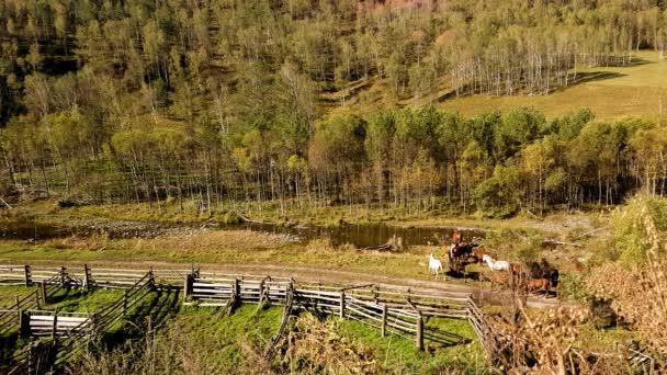 Stádo koní, to jde přes horský potok a ponechává v lese