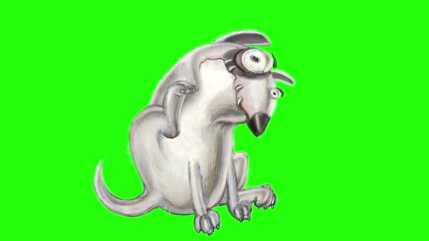 Dühös kutya Bullterrier ül, viszket és sóhajt. Végtelenített animáció.