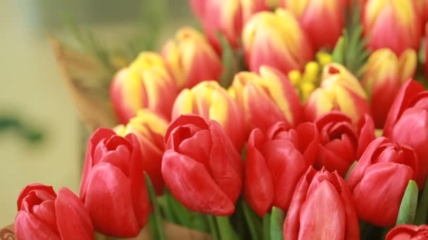 juicy, colorful bouquet of different color tulips and mimosas, close-up