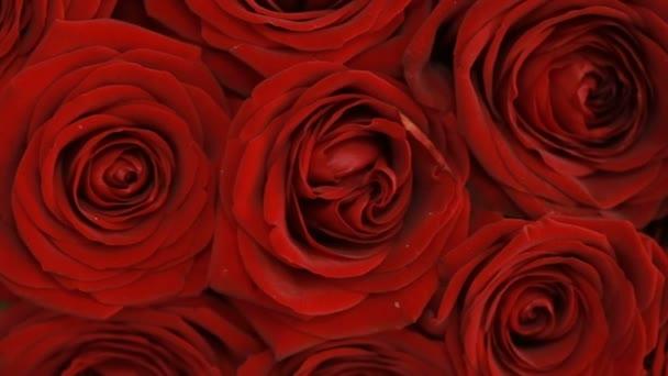 velká kytice fialová růže