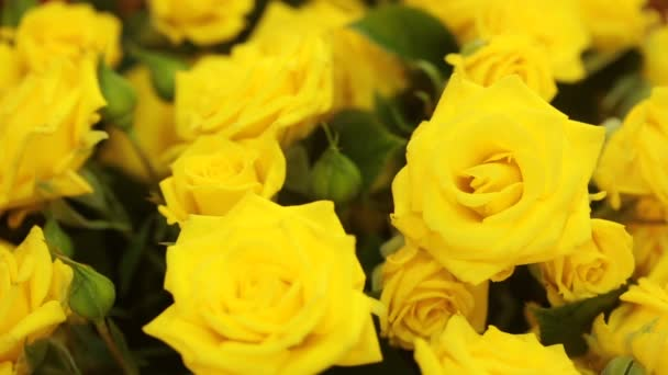 gentle big bouquet of yellow roses , close-up