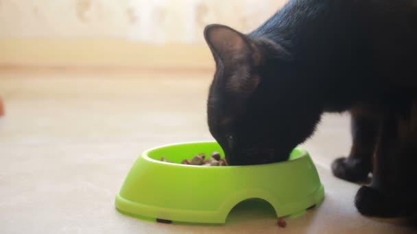 Černá kočička jíst videa