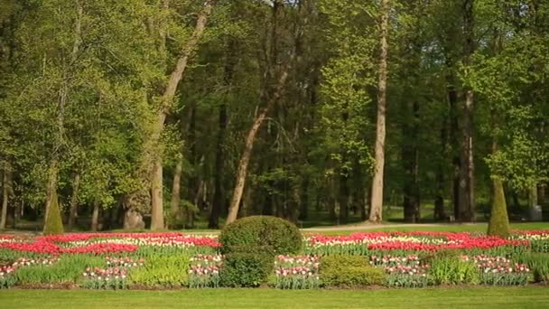 Blumenbeet von vielen frischen roten, weißen und rosa Tulpen Blumen ...