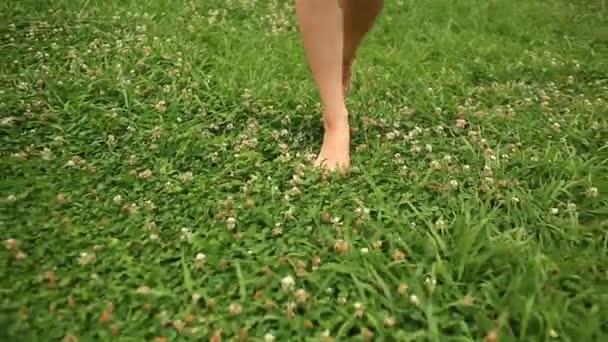Zenske bosé nohy, chůze po zelené louky, květů jetele