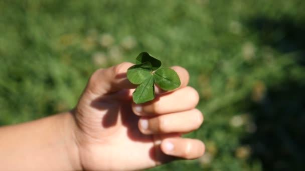 Dětská ruka drží čtyři listy jetele na pozadí zelené trávy. Uzavřete - nahoru. Slow-mo