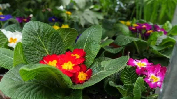 Schöne Pflanzen Und Blumen In Einem Gewächshaus Frau