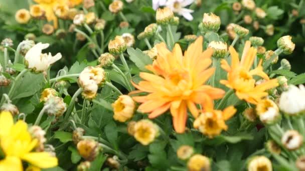 Hermosas plantas y flores en un invernadero dise ador de paisaje de mujer selecciona las - Disenador de jardines ...