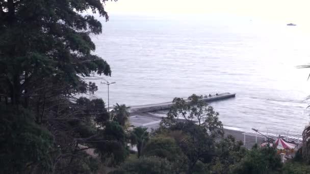 4k Sagoma Di Un Albero Contro Lo Sfondo Cielo E Mare La Vista Di Unisola Tropicale Oceano Ricreazione Di Paesaggio Lasso Di Tempo