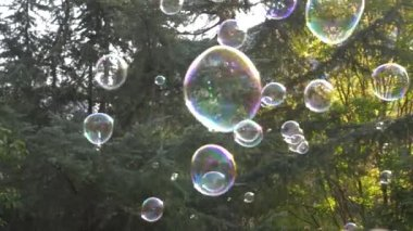 Metamorphosis of big soap Bubbles in Slow Motion. Close up view of a beautiful big soap bubble is flying near the trees at sunny day. 4k