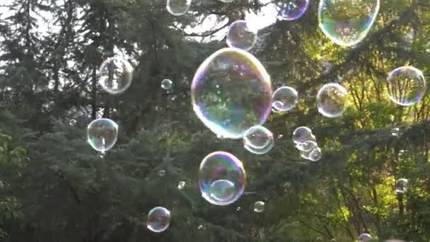 Metamorfóza velké mýdlové bubliny v pomalém pohybu. Zblízka pohled na krásné velké mýdlová bublina letí blízko stromů na slunečný den. 4k