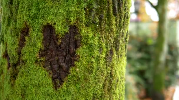 sign heart carved in the moss on the tree bark. background natural
