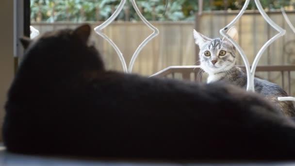 fekete macska fekszik az ablakpárkányon, és nézi a macska kívül az ablakon