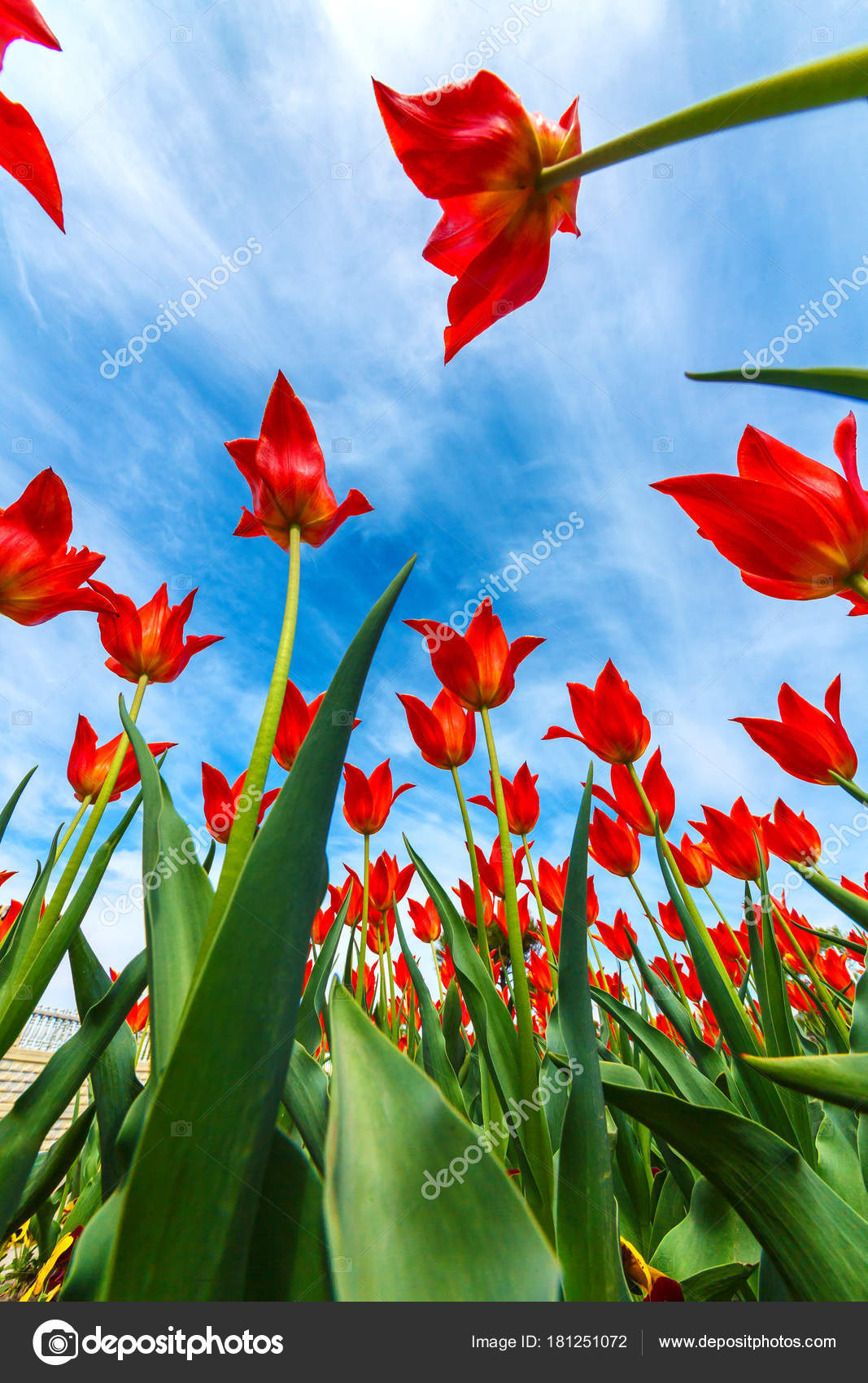Beautiful Spring Flowers Large Flowers Stretch Sky Interesting View