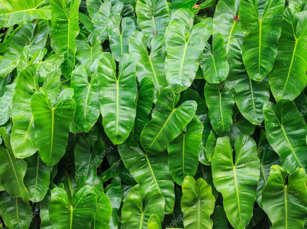 Vzor Zelené Listy S Vodou Drop V Zahradní Dekorace Stock