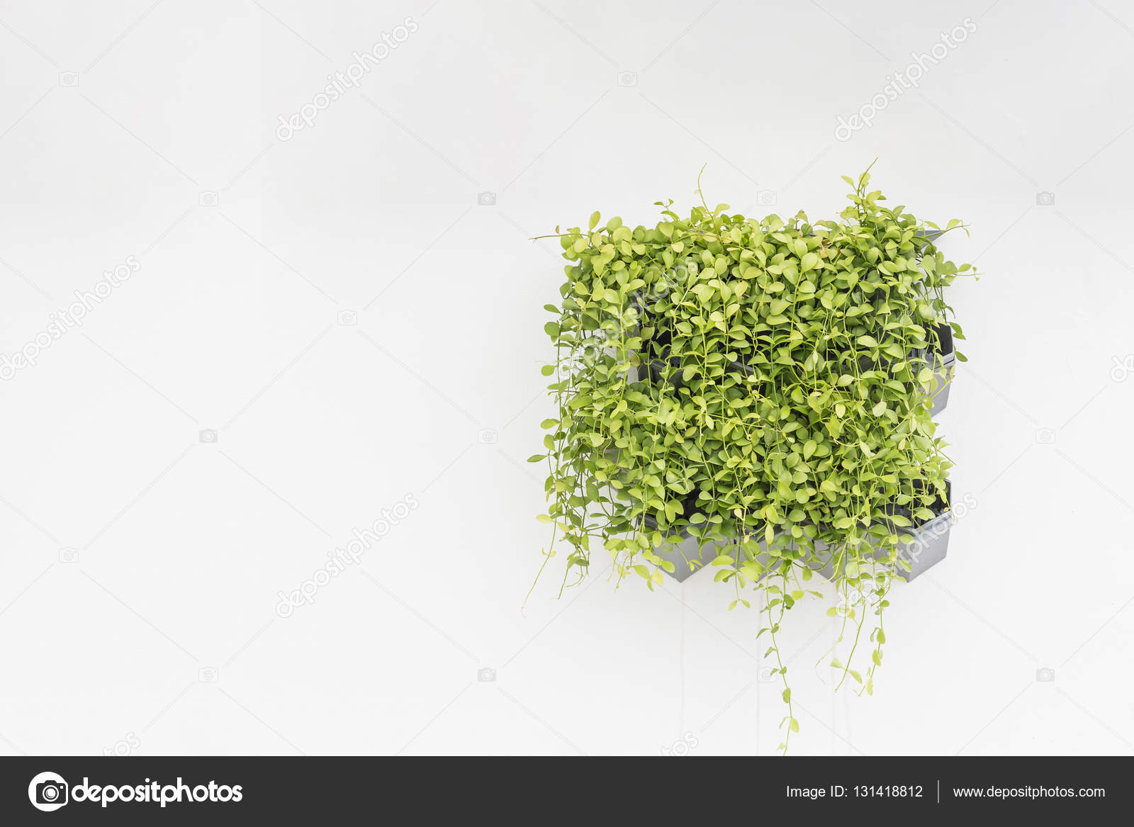 Green Plant In Planter Box Hanging On White Cement Wall Stock