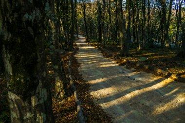 "Картина, постер, плакат, фотообои ""парк леса путь кутаиси деревья сатаплия природа"", артикул 328666648"
