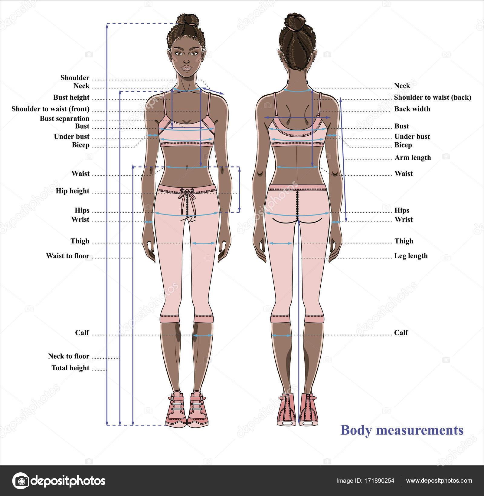 Tabla Medidas Cuerpo Mujer Esquema Para Cuerpo Humano Medición Para ...