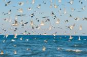 Spousta hladových racků na obloze a na mořském pozadí