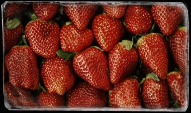 Macro photo of a lot of strawberries in full frame. Food Concept stock vector
