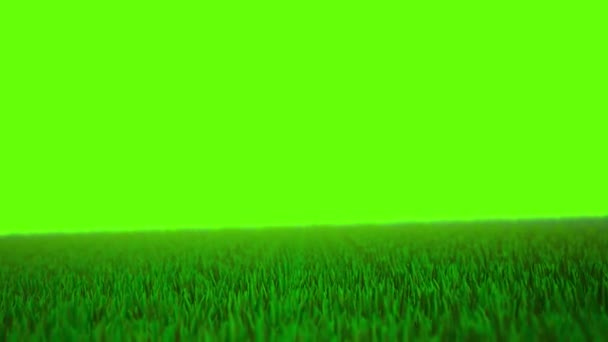 3D Animation of Green Grassy Field on Green Screen