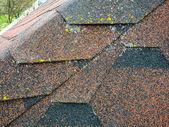 Střecha s asfaltového dlaždice
