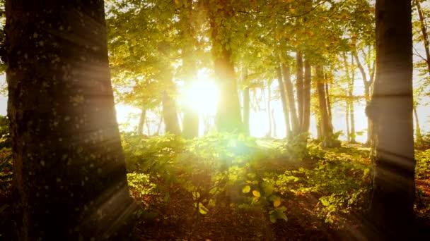 krásné podzimní období příroda prostředí