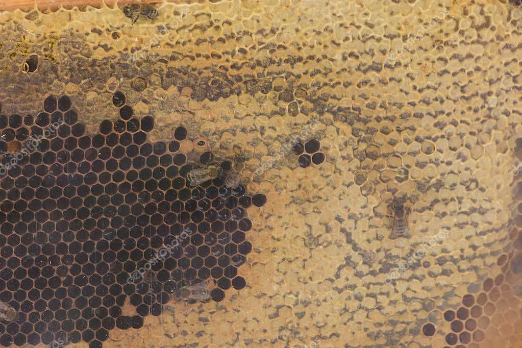 View of the honeycomb of a beehive