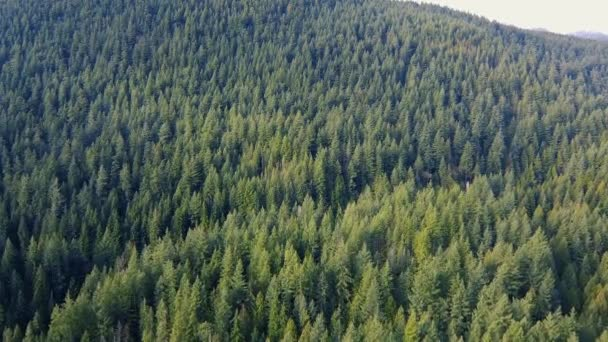 Leť přes zelené borovice v horách