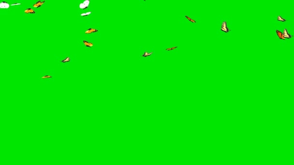Beautiful flying butterflies with green screen background