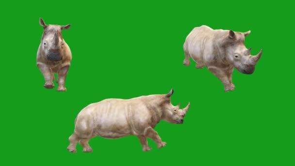 Pohybová grafika Rhino se zeleným pozadím obrazovky