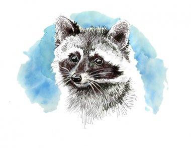 Raccoon  cartoon style portrait.