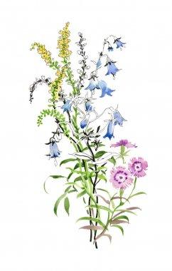 hand drawn beautiful wildflowers