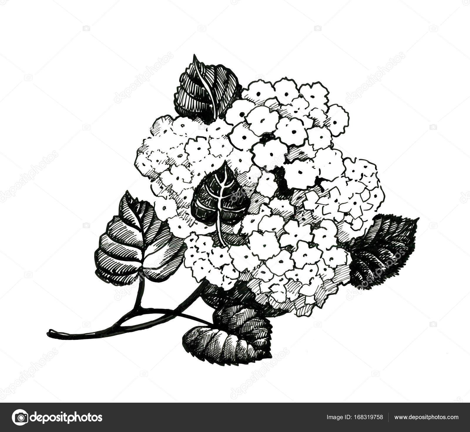 Hand Drawn Black And White Flowers Stock Photo Kostan Proff