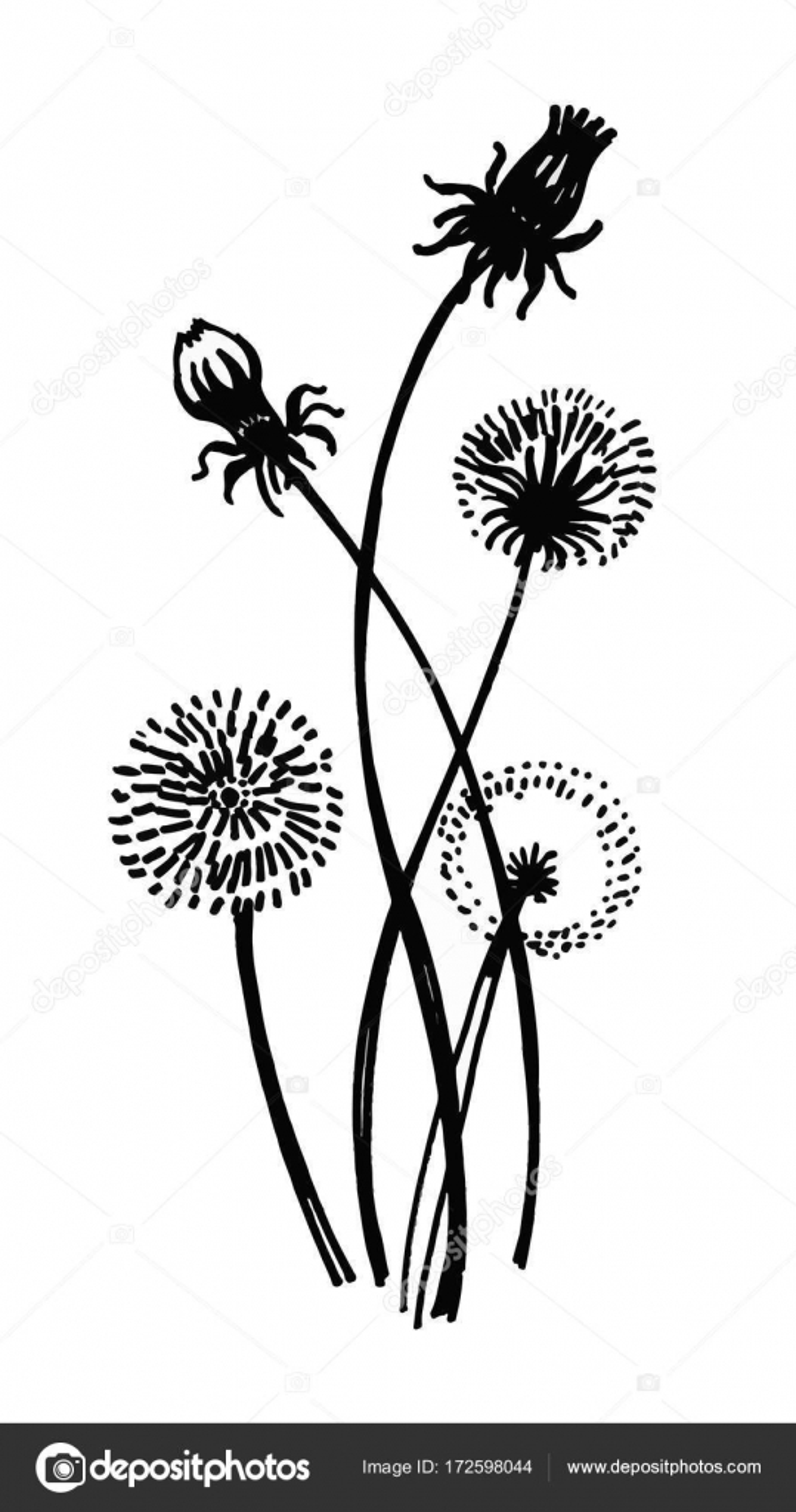 Aislado floreciente Prado flor forma contorno natural impresión ...