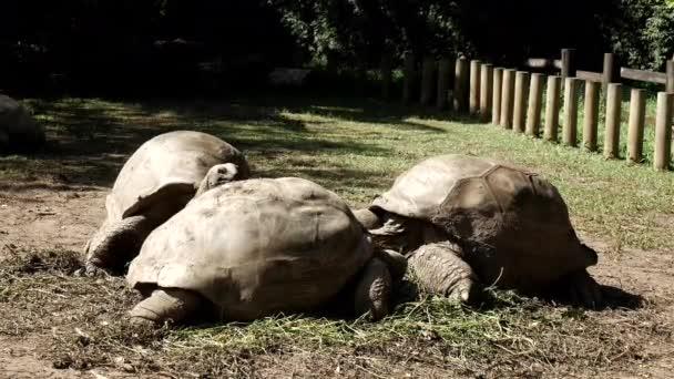 A család teknős pihentető állatkertben a napsütéses lusta napon, statikus közeli lövés