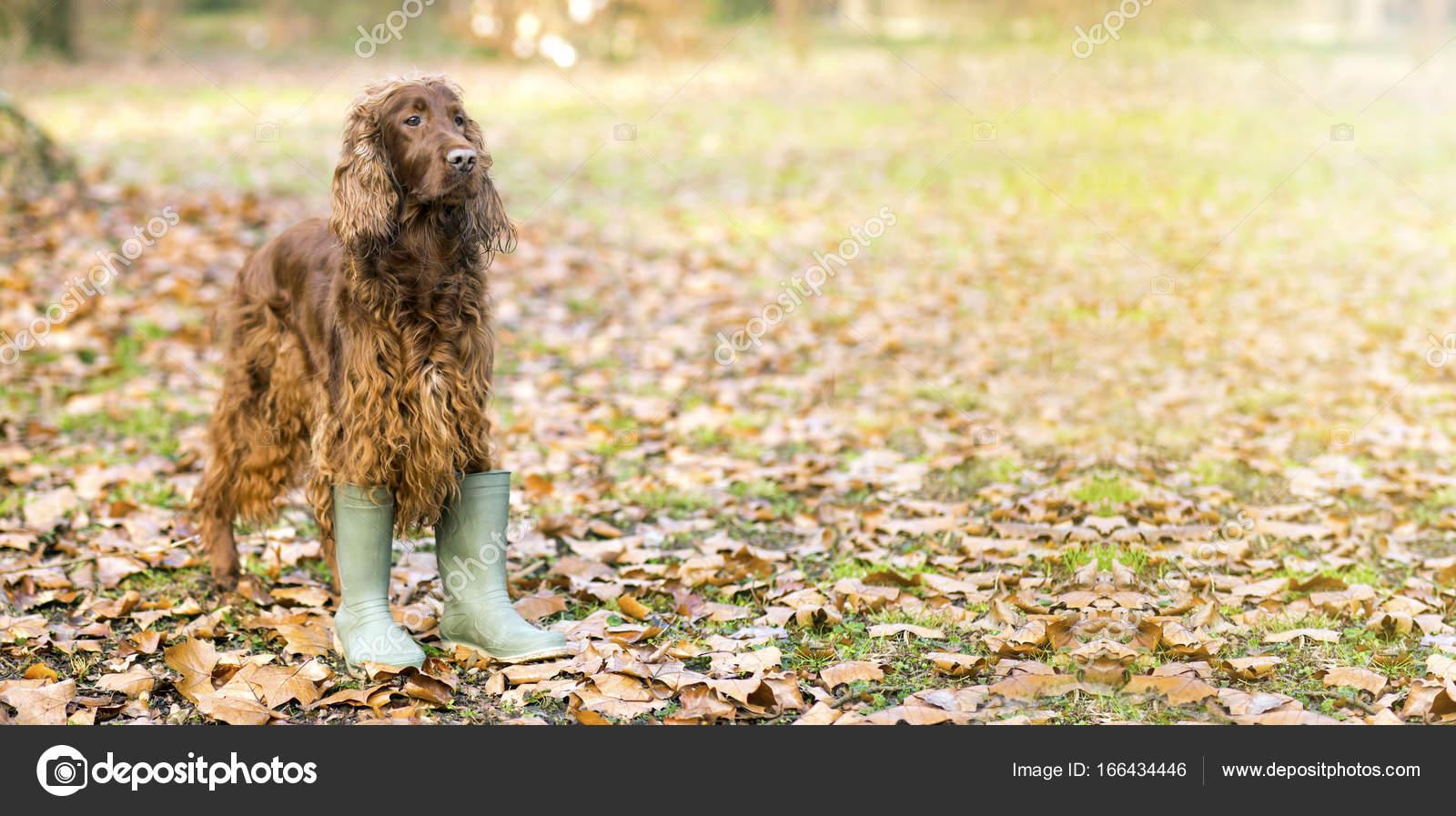29a003e4e6e Funny dog in Autumn — Stock Photo © marenka1 #166434446