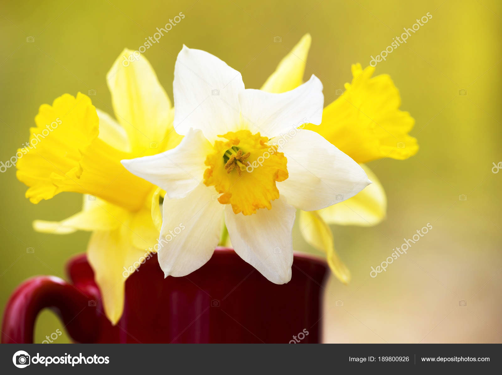 White And Yellow Easter Flowers Stock Photo Marenka1 189800926