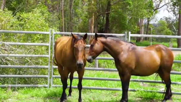 Two beautiful horses stand side by side in green fenced yard, slow motion, sunny