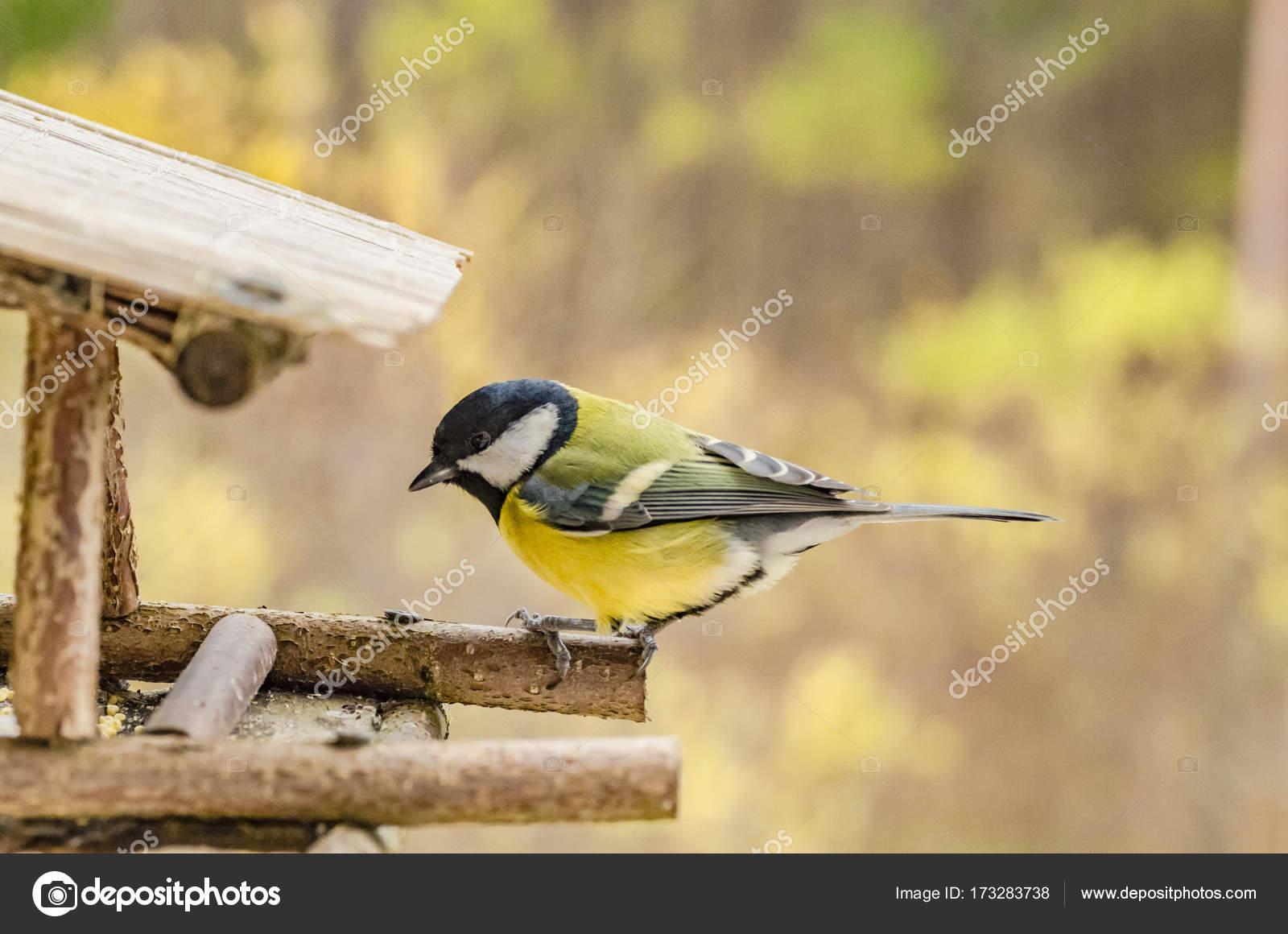 Ψάχνοντας για ένα μεγάλο πουλί
