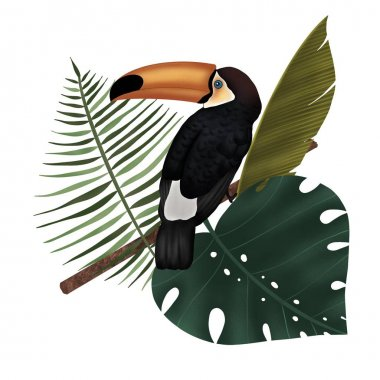 Toucan on a branch in the jungle
