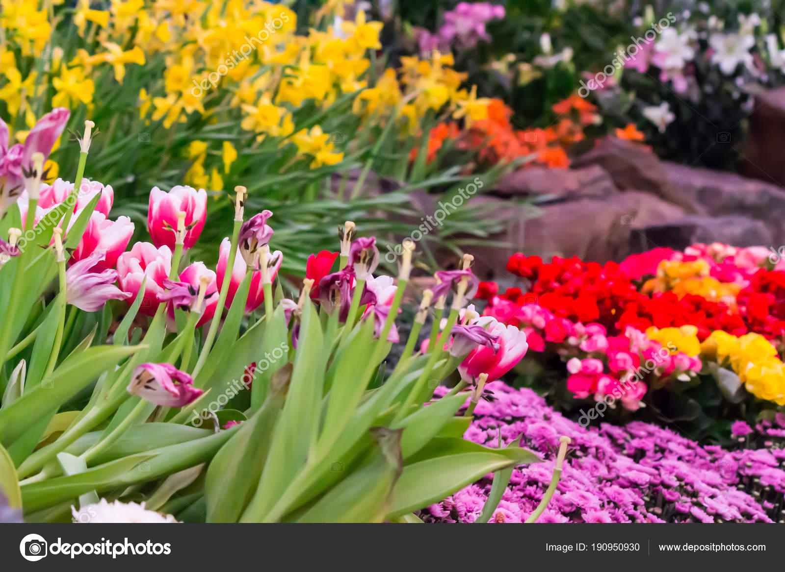Fiori che fioriscono in estate fabulous variet di fiori for Fiori che sbocciano