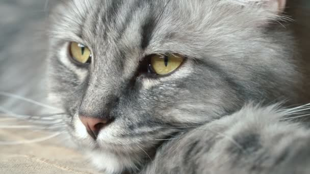 Close-up video of cats face.