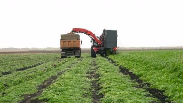 Kombinovat kombajn sklizeň brambor