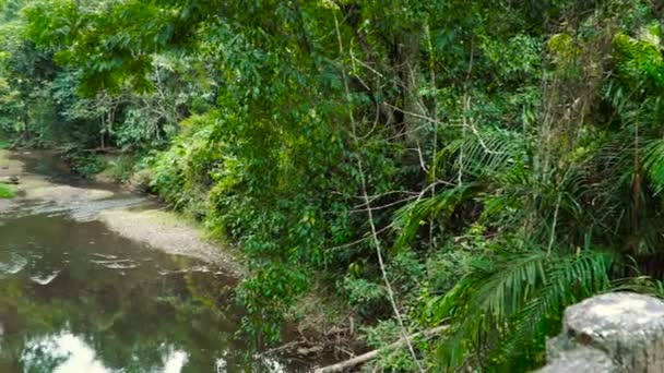 Jungle krajina s tekoucím proudem