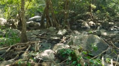 Jungle landscape with flowing river