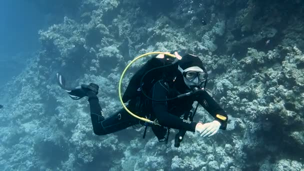 Diver moving along colorful coral reef, Red sea, Egypt. Full HD underwater footage.