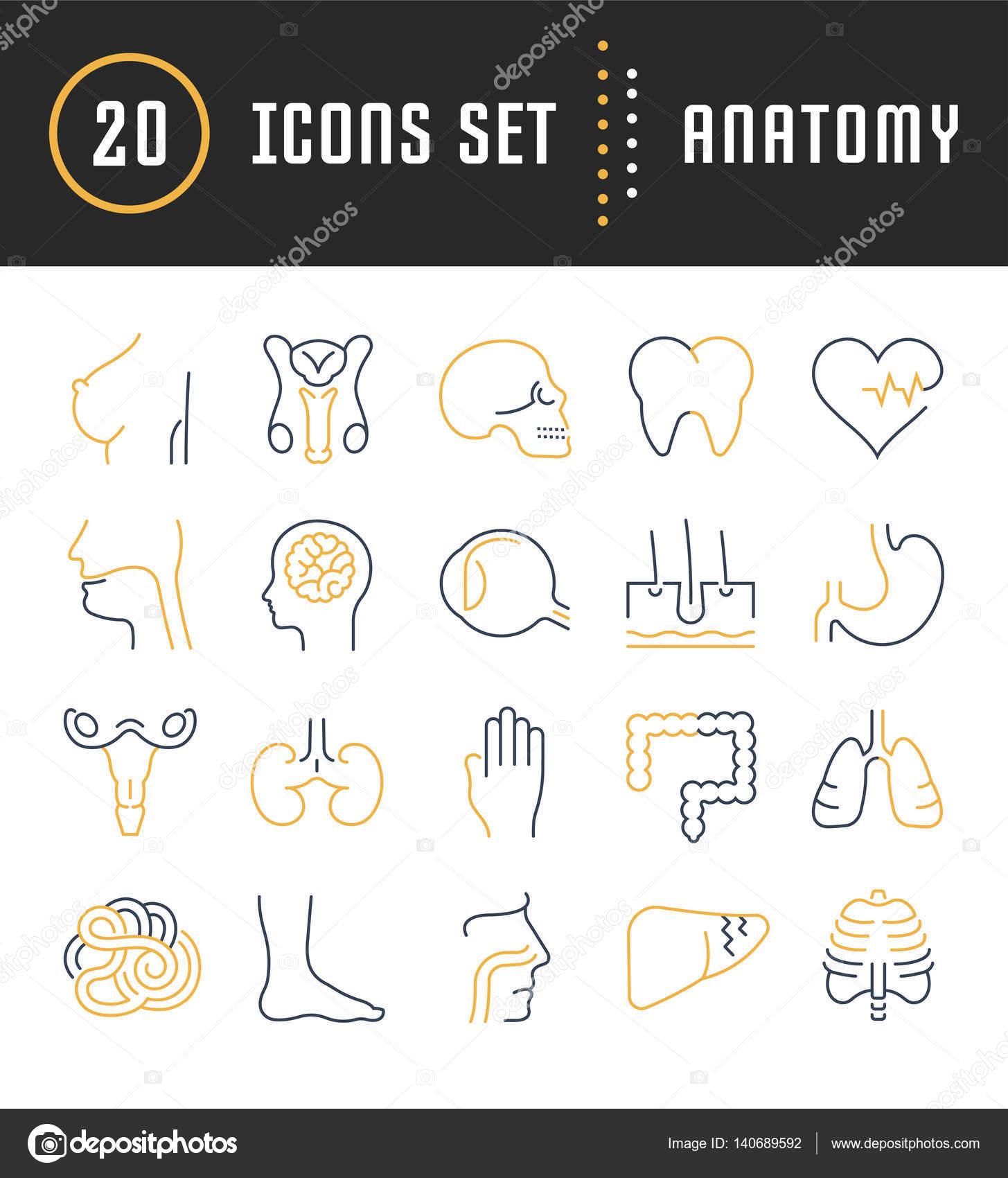 Anatomía de los iconos Vector Set línea plana — Archivo Imágenes ...