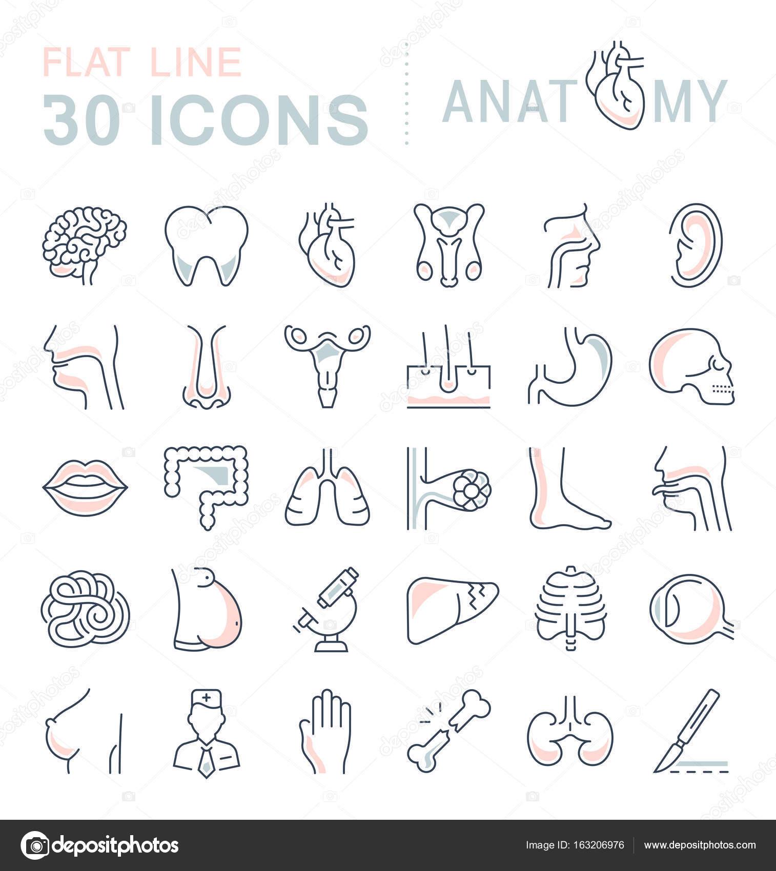 Conjunto de iconos de la línea de la anatomía y fisiología — Vector ...