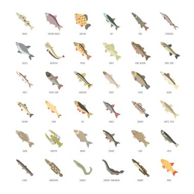 Set Vector Flat Icons of Freshwater Fish