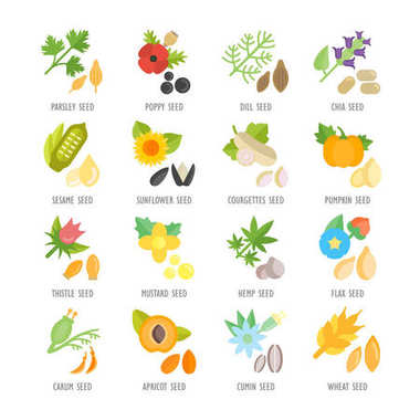 Set Vector Flat Icons of Seeds